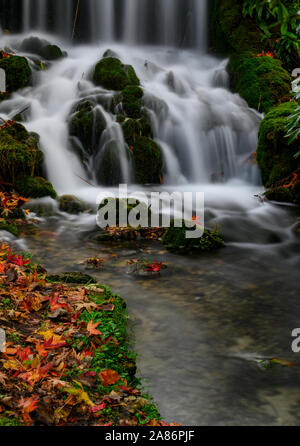 Littlebredy, Dorechester, Dorset, UK. 6th November 2019. UK Weather:  The picturesque little waterfall made famous by the TV show Broadchurch makes for a colourful autumnal scene surrounded by brightly coloured leaves that have fallen from the trees overhead. Credit: Celia McMahon/Alamy Live News. - Stock Photo