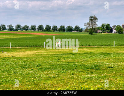 Amish Girl Training and Running with a Young Pony on a Sunny Summer Day - Stock Photo