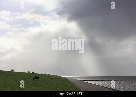 Grazing sheep on sea dike near the Wadden Sea in Friesland The Netherlands under a stormy sky in backlight - Stock Photo