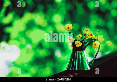 Beautiful bouquet of buttercups or daisy in small tin jar on sunny bokeh green and yellow background, countriyside concept. Selective focus. - Stock Photo