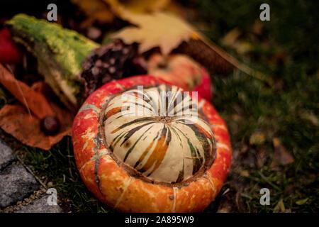 Autumn background of multi-colored decorative pumpkins.Multi-colored pumpkins in the garden. Halloween preparation. - Stock Photo