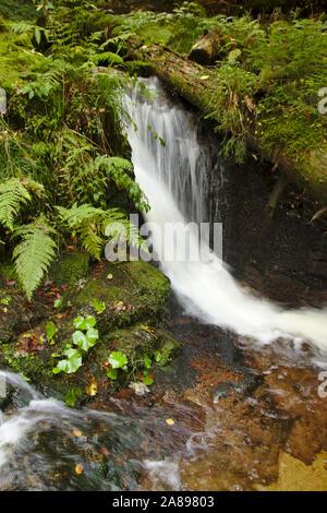 Windsbergschlucht with waterfall, near St. Blasien,  autumn, Black Forest, Germany - Stock Photo