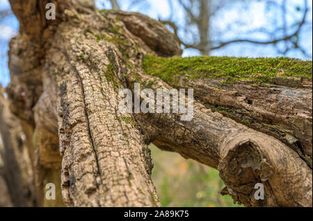 Old broken and sawed off tree trunk on a bright autumn day, in Upstate New York - Stock Photo