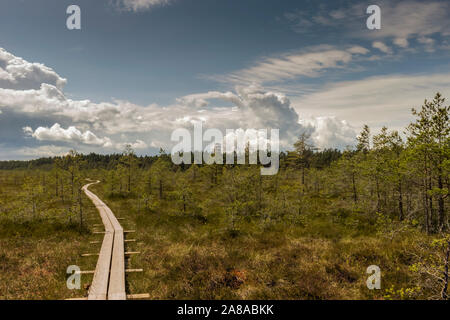 Wooden boardwalk through beautiful forest and swamp. Estonia - Stock Photo