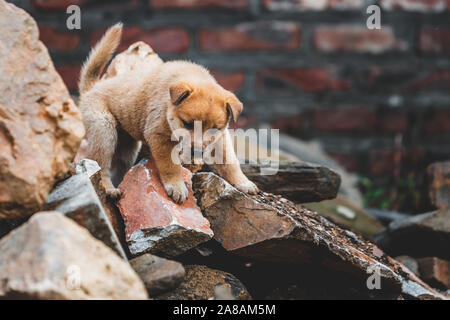 A cute lone abandoned puppy climbing on rubble after a house collapsed in Vietnam