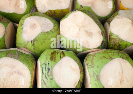 Stack of freshly young green coconuts pre-cut for sale as coconut water outdoors at a tropical beach shack - Stock Photo