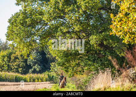 Floors Castle, Kelso, Scottish Borders, UK. 28th October 2019. The Duke of Buccleuch foxhounds flush foxes to guns in the grounds of Floors Castle at - Stock Photo