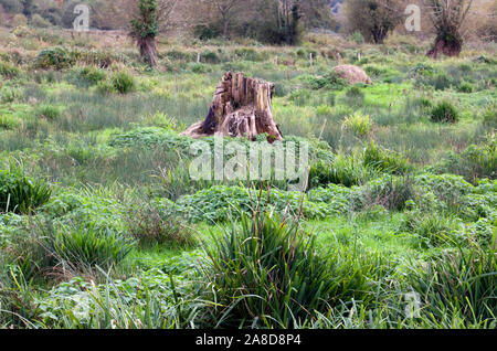 Water meadow area by the side of the River Itchen, Winchester, Hampshire - Stock Photo