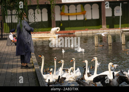 A Pakistani man wearing a long grey gown stood by a lake feeding Swans at Roundhay Park,West Yorkshire,Leeds,England. - Stock Photo