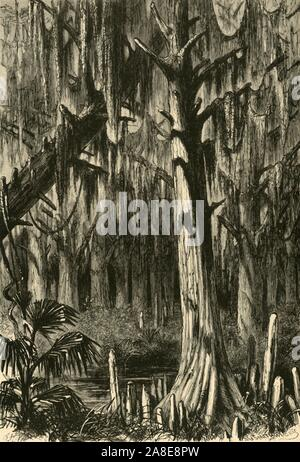 "'Cypress-Swamp', 1872. Freshwater forested wetland in Mississippi, southern USA. From ""Picturesque America; or, The Land We Live In, A Delineation by Pen and Pencil of the Mountains, Rivers, Lakes...with Illustrations on Steel and Wood by Eminent American Artists"" Vol. I, edited by William Cullen Bryant. [D. Appleton and Company, New York, 1872] - Stock Photo"