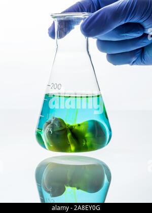 Modell eines Embryos in einem Laborglas. Symbolfoto für Schwangerschaft durch künstliche Befruchtung. Abtreibung und Genmanipulation, 10 Wochen alter - Stock Photo