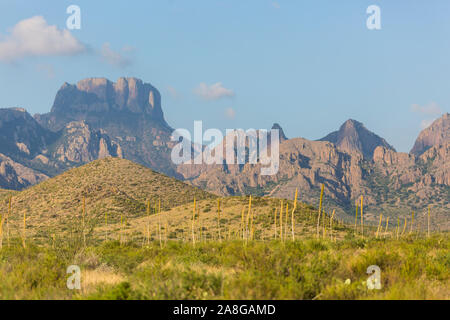 Landscape view of Big Bend National Park near the Chisos Basin during sunset in Texas.