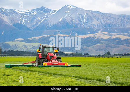 Canterbury, New Zealand, November 9 2019: A Massey Ferguson tractor and Kverneland mower cutting grass for silage on a rural farm - Stock Photo
