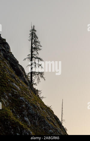 Lonely tree growing on rock - Stock Photo