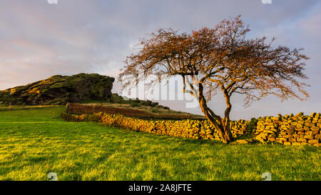 The iconic profile of Almscliffe Crag in Lower Wharfedale catches the first light of day on an autumn morning behind a lone tree and stone wall. - Stock Photo