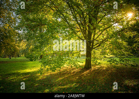 Fall in the park, yellow leaves falling off the tree