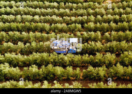 New Holland Olive harvester working in a field, Aerial image.