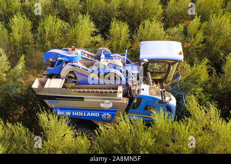 New Holland Olive harvester working in a field, Aerial view.