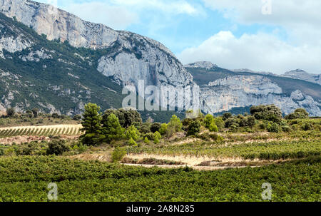 Vineyards in La Rioja in Spain on a sunny day. - Stock Photo