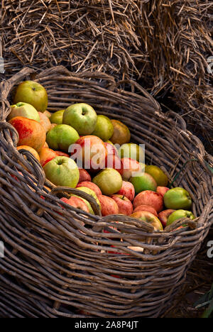 Apples in a basket; Stock Photo