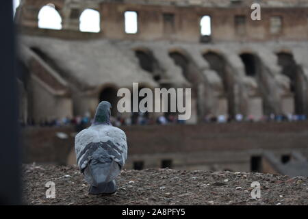 A pigeon in Rome sitting and observing people and the environment around it - Stock Photo