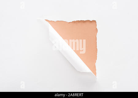 white torn and rolled paper on beige background - Stock Photo