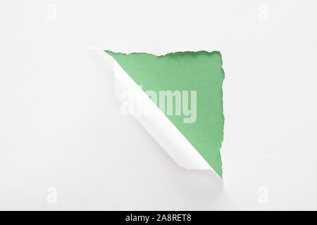 white torn and rolled paper on green background - Stock Photo