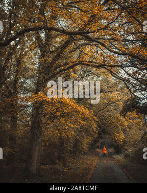 A person in a raincoat walks down a dark path in the woodlands of Berkshire, England during the autumn season