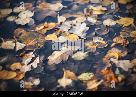 Various autumn leaves lie, fallen from the branches, in a dark dirty gray puddle in the November time. - Stock Photo