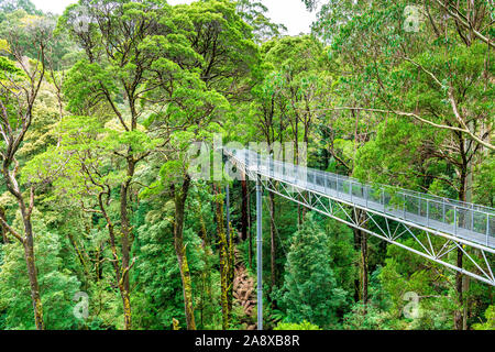 A steel walkway dissects the huge myrtle beech trees at Otway Fly in Victoria, Australia - Stock Photo