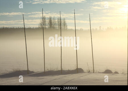 Five tall wooden poles in winter landscape and fields. During summer season the poles are used as plant support for hops. - Stock Photo