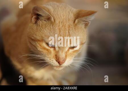 Homeless ginger cat resting on the street - Stock Photo