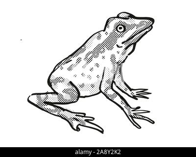 Retro cartoon line drawing style drawing of a Andersson's Stubfoot Toad, an endangered wildlife species on isolated background done in black and white - Stock Photo