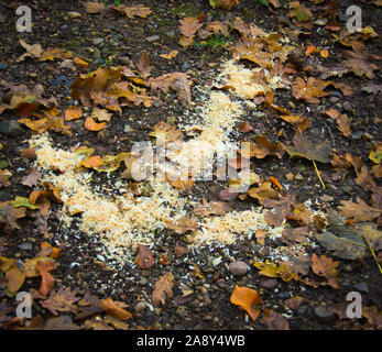 A bright arrow laying on the ground in a forest - Stock Photo