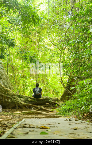 Stunning view of an unidentified traveler sitting on a large tree root in the middle of a walkway that runs through the Taman Negara National Park. - Stock Photo