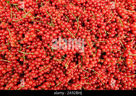 Rote Johannisbeeren, (Ribes rubrum) - Stock Photo