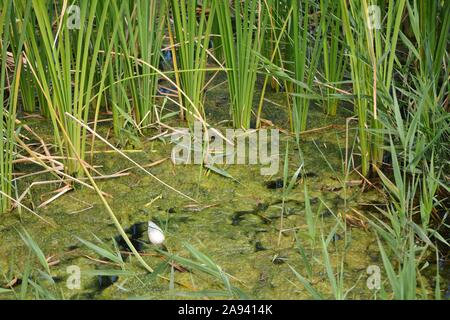 plants, algae and plastic in stagnant water - Stock Photo