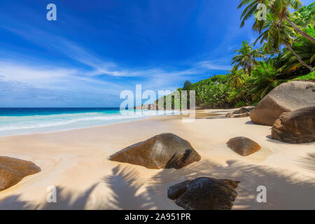 Coconut palm trees on exotic tropical beach in paradise island in blue ocean