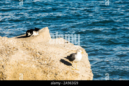 Two seagulls on a rock in the ocean. - Stock Photo