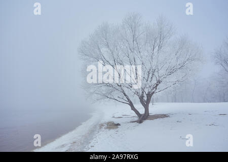 Winter river with a lone tree covered with hoarfrost on the shore - Stock Photo