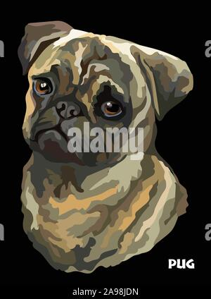 Colored portrait of Pug isolated vector realistic illustration on black background - Stock Photo