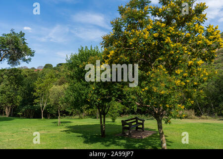 Bench in a shady spot under a tree in the Walter Sisulu botanical gardens in Johannesburg, South Africa - Stock Photo