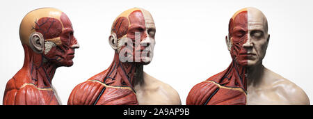 Human body anatomy muscles structure of a male, front view side view and perspective , 3d render background - Stock Photo