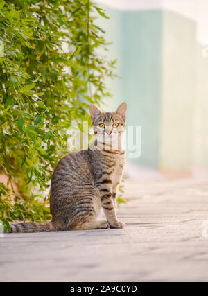 Cute young cat, brown tabby, sitting attentively on a street in front of green bushes and watching curiously, Rhodes, Greece - Stock Photo
