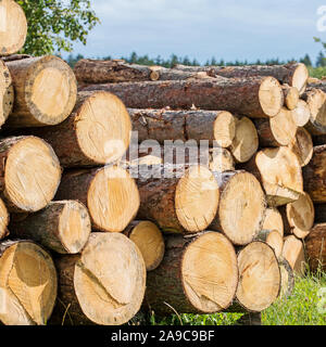 Stacked wood trunks on the edge of the forest - Stock Photo