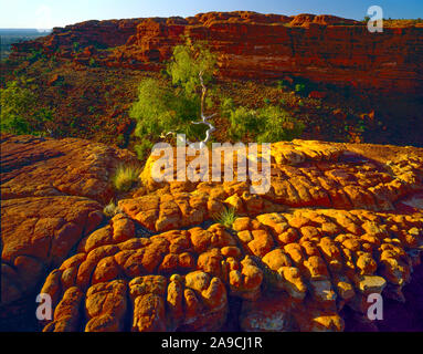 Rock patterns, Watarrka National Park, Australia , Kings Canyon, Northern Territory, Rim of Kings Creek, The Lost City - Stock Photo