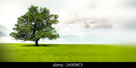 Old oak - Stock Photo