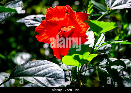 Beautiful flowers such as hibiscus, heliconia, sunflower found in the Caribbean
