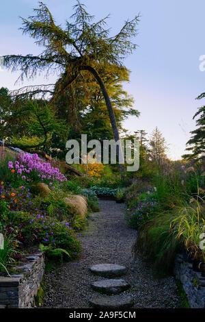 June Blake's Garden,Wicklow,Ireland,Garden,gardens,herbaceous border,mix,mixed,planting,perennials,dahlias,larch tree,RM Floral - Stock Photo
