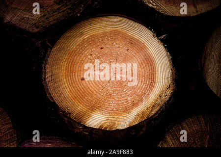 Tree trunk with annual rings